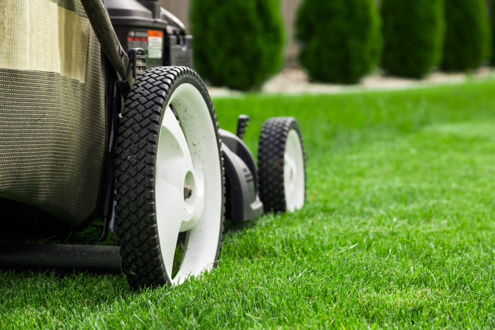 save money on lawn care